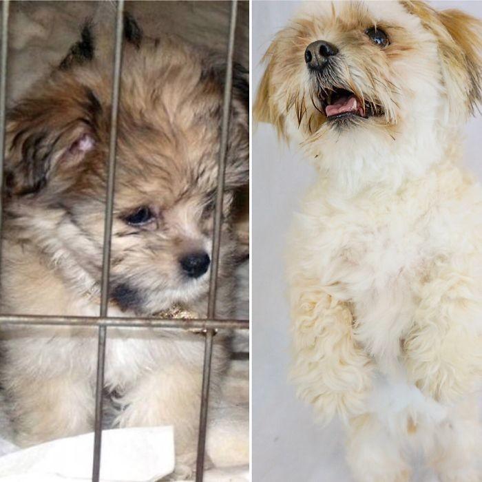 Кейджи в 3 месяца и в 6 лет до и после, животные, любимцы, мило, питомцы, собаки, трогательно, фото