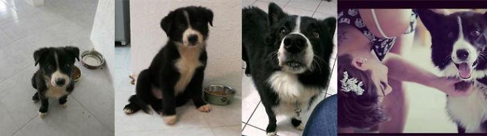 Лучший друг на всю жизнь до и после, животные, любимцы, мило, питомцы, собаки, трогательно, фото