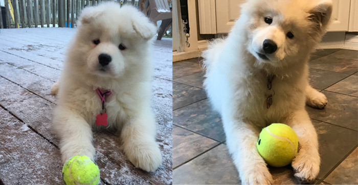 Мочи в 2 месяца и в полгода до и после, животные, любимцы, мило, питомцы, собаки, трогательно, фото