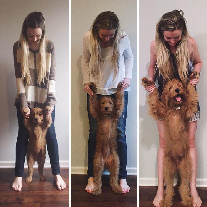 9 недель, 13 недель, 21 неделя до и после, животные, любимцы, мило, питомцы, собаки, трогательно, фото