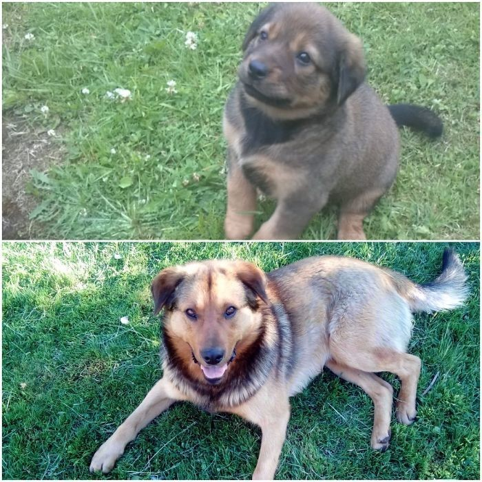 Бэтмен в 3 месяца - и 2 года спустя до и после, животные, любимцы, мило, питомцы, собаки, трогательно, фото