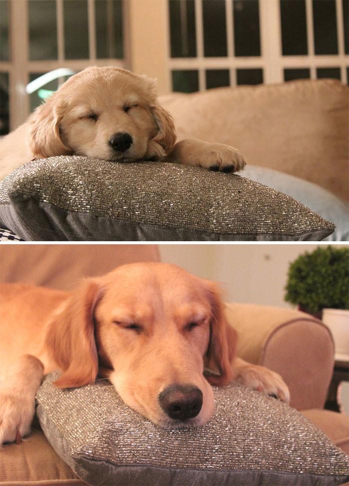 Всего 1 год прошел - а как он изменился! до и после, животные, любимцы, мило, питомцы, собаки, трогательно, фото