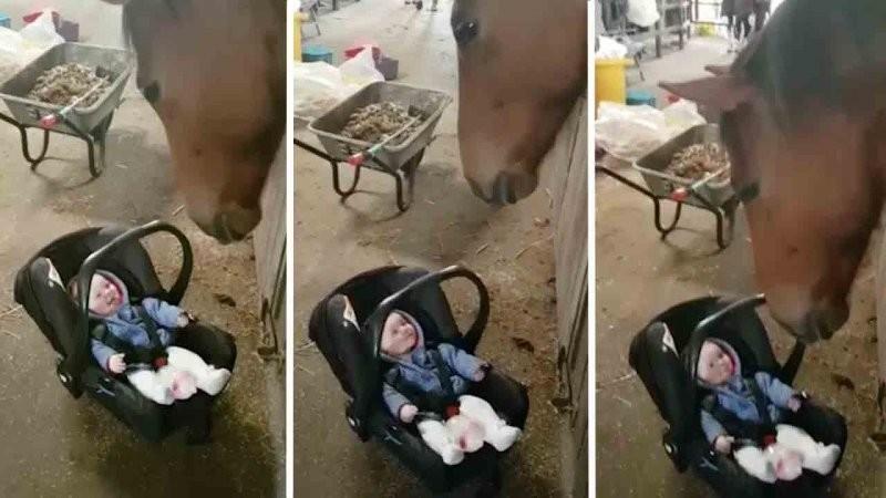 Эта лошадь знает, как успокоить плачущего ребенка  видео, дети, животные, милота, плач, ребенок, эмоции