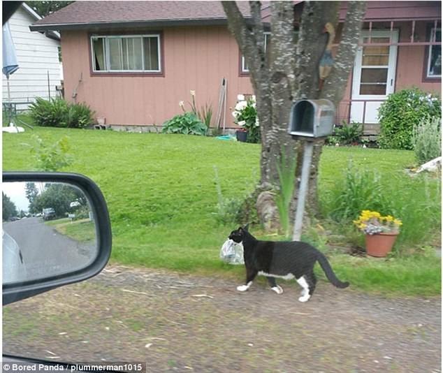 Газетка? Пригодится на подстилку! воришки, животные, коты, кошки, смешно, фото, хитрость, хитрый хвост