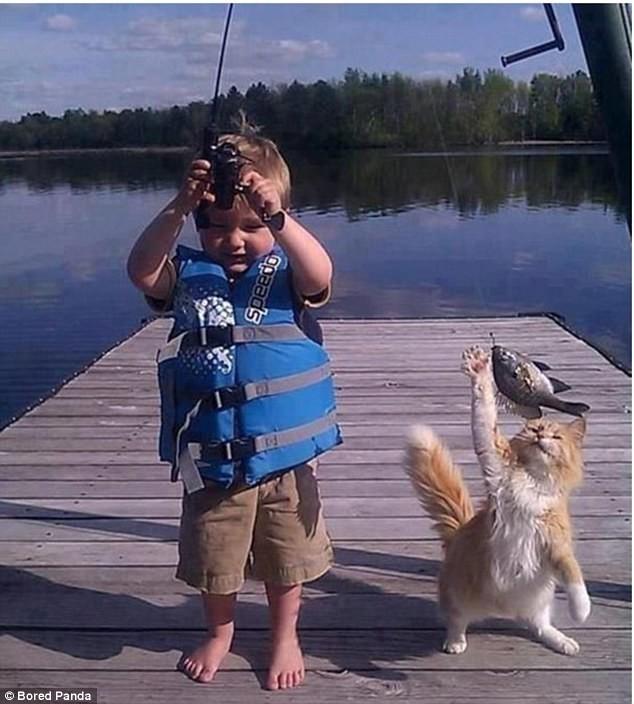Пока рыбак радуется воришки, животные, коты, кошки, смешно, фото, хитрость, хитрый хвост