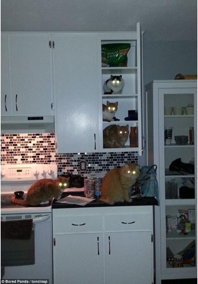 Потому что мы - банда! воришки, животные, коты, кошки, смешно, фото, хитрость, хитрый хвост