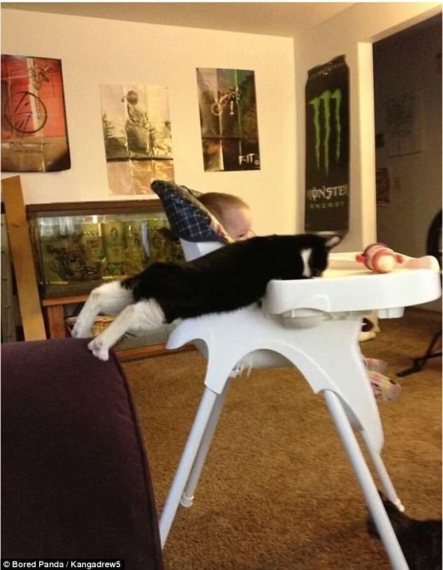 Все доел? А если проверю? воришки, животные, коты, кошки, смешно, фото, хитрость, хитрый хвост