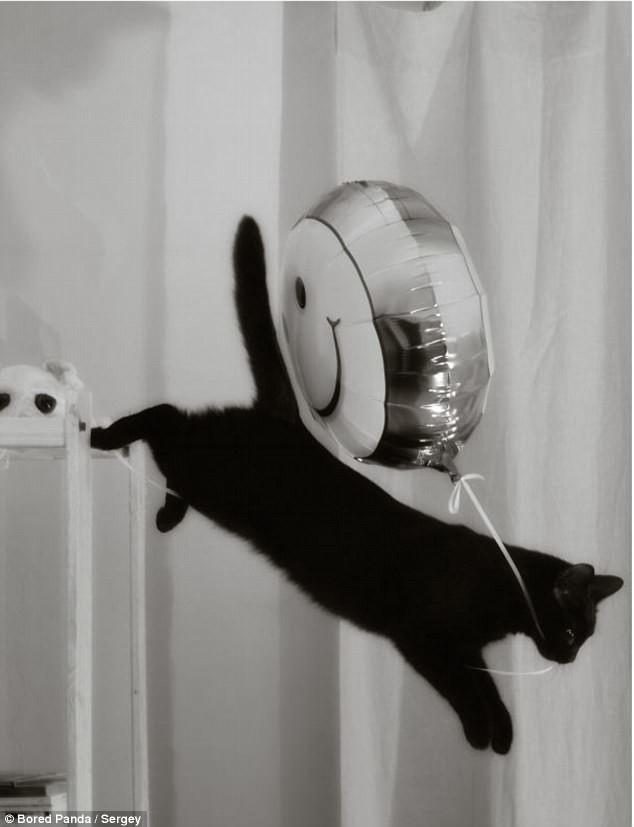 Кошке тоже праздник нужен! воришки, животные, коты, кошки, смешно, фото, хитрость, хитрый хвост