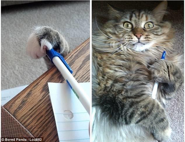 Ручку не забудьте вернуть! воришки, животные, коты, кошки, смешно, фото, хитрость, хитрый хвост