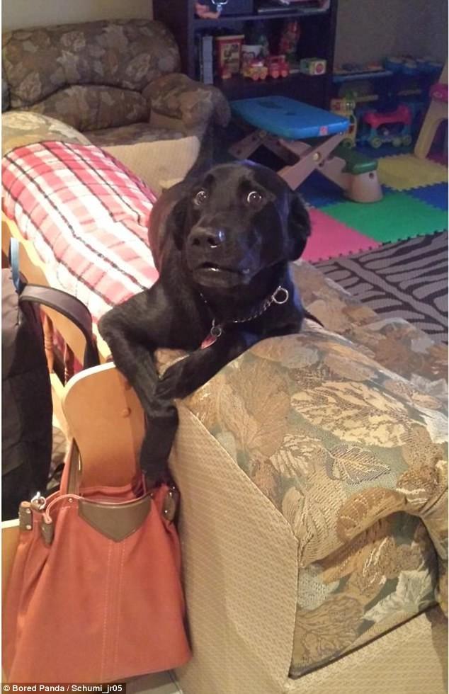 Собаки нносят ответный удар! воришки, животные, коты, кошки, смешно, фото, хитрость, хитрый хвост