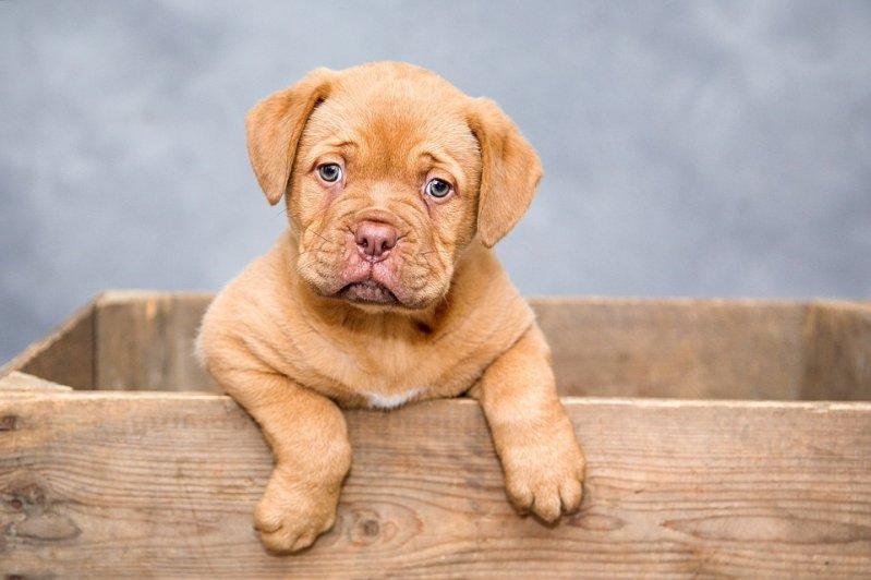 Какие прививки делают щенкам? полезное, полезные советы, собаки, советы