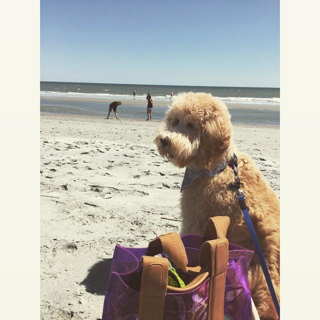 """1. """"Ты не думаешь, что я принёс с собой слишком много вещей?"""" милота, пляж, собаки"""