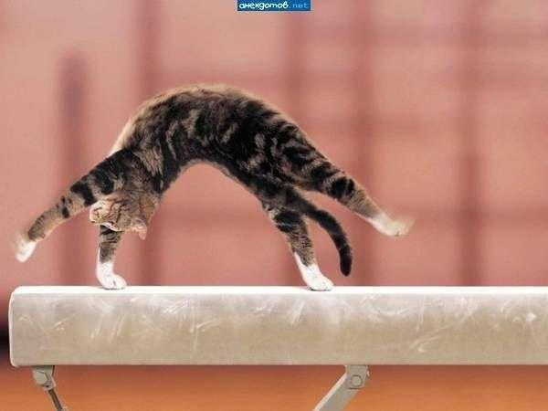 Котогимнастика домашние питомцы, енот, животные, кошки, собаки