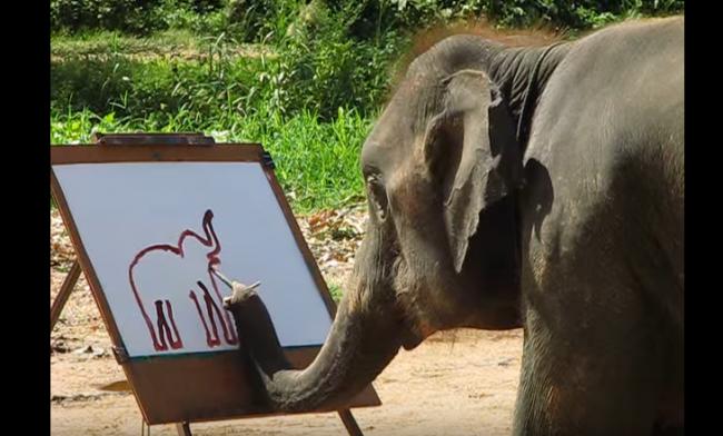 Просто слон рисует автопортрет домашние питомцы, енот, животные, кошки, собаки