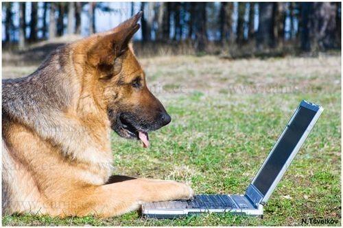 Ок гугл, как познакомится с красивой самкой? домашние питомцы, енот, животные, кошки, собаки