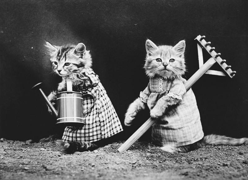 Крестьянские котики домашние питомцы, енот, животные, кошки, собаки
