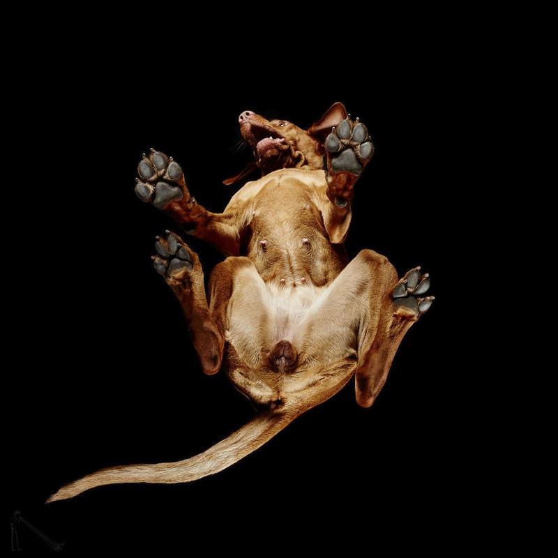 15. андриус бурба, вид снизу, необычный ракурс, собаки, фото