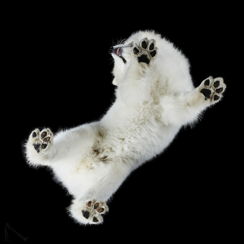 16. андриус бурба, вид снизу, необычный ракурс, собаки, фото