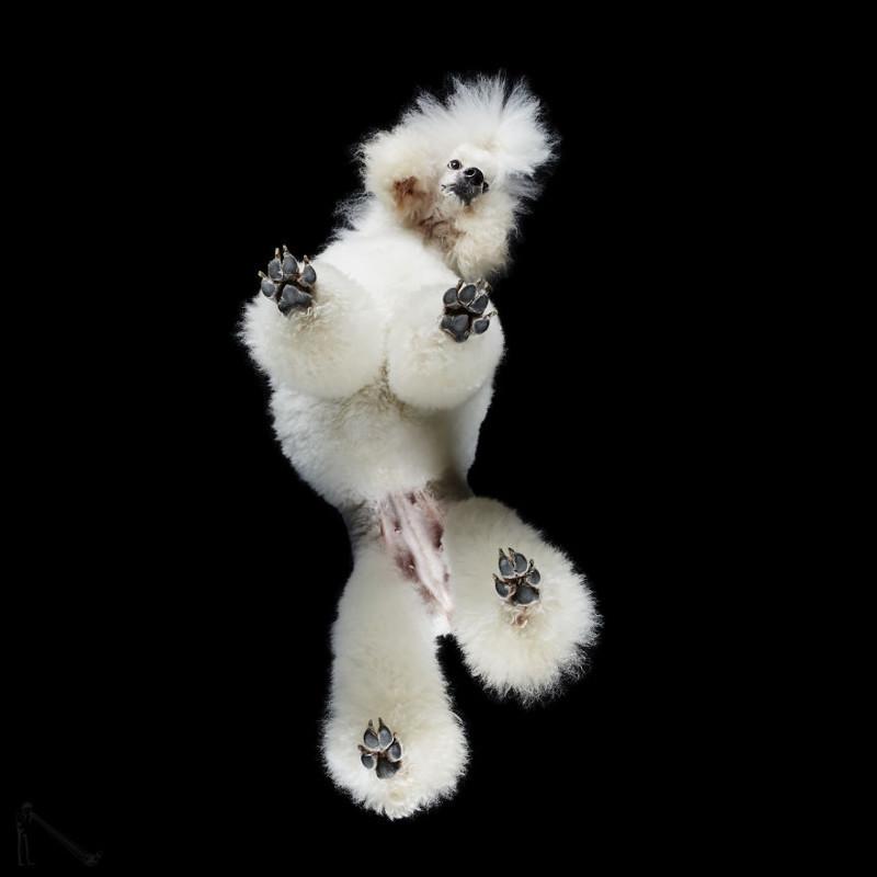26. андриус бурба, вид снизу, необычный ракурс, собаки, фото
