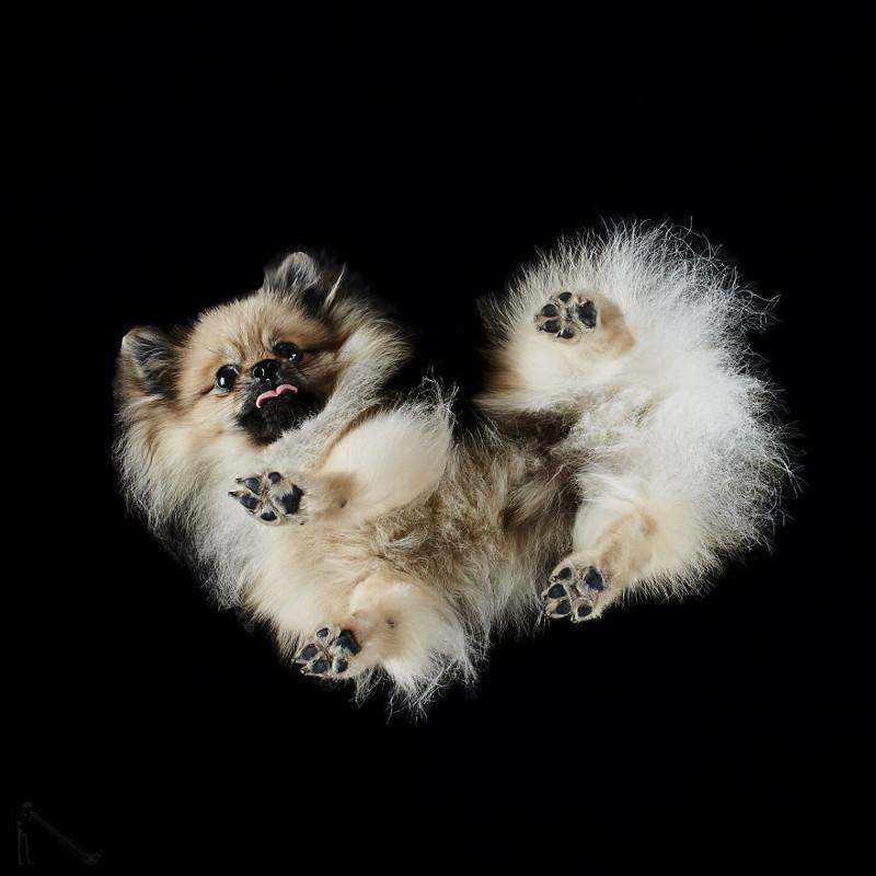 10. андриус бурба, вид снизу, необычный ракурс, собаки, фото