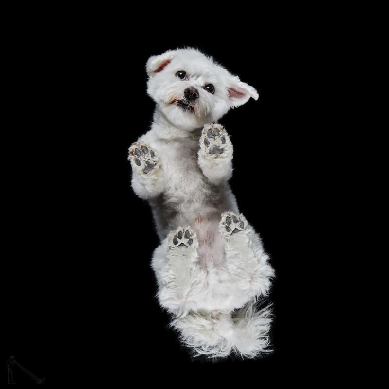 23. андриус бурба, вид снизу, необычный ракурс, собаки, фото