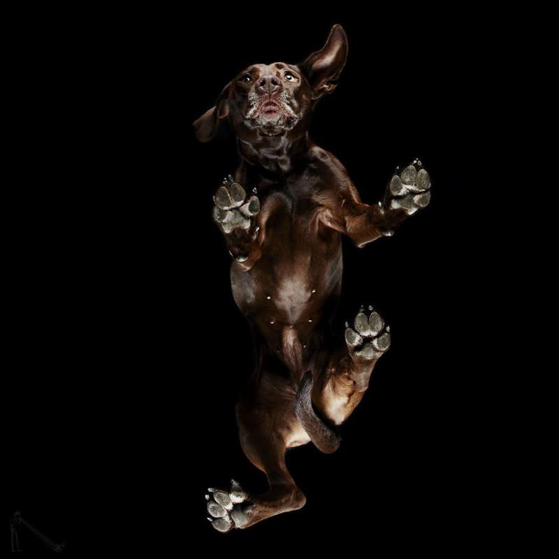 22. андриус бурба, вид снизу, необычный ракурс, собаки, фото