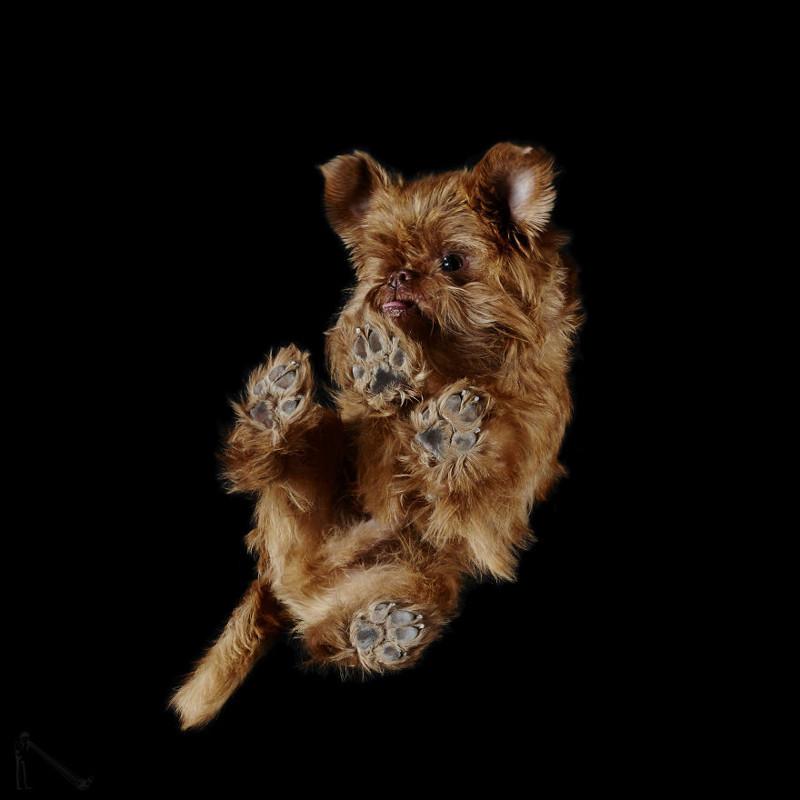 13. андриус бурба, вид снизу, необычный ракурс, собаки, фото