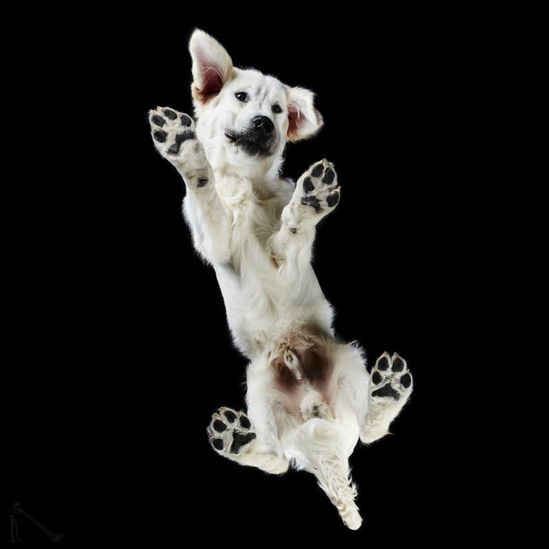 25. андриус бурба, вид снизу, необычный ракурс, собаки, фото