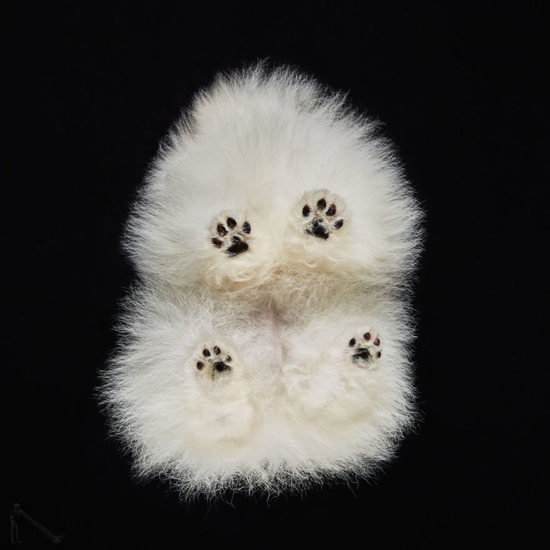 1. андриус бурба, вид снизу, необычный ракурс, собаки, фото