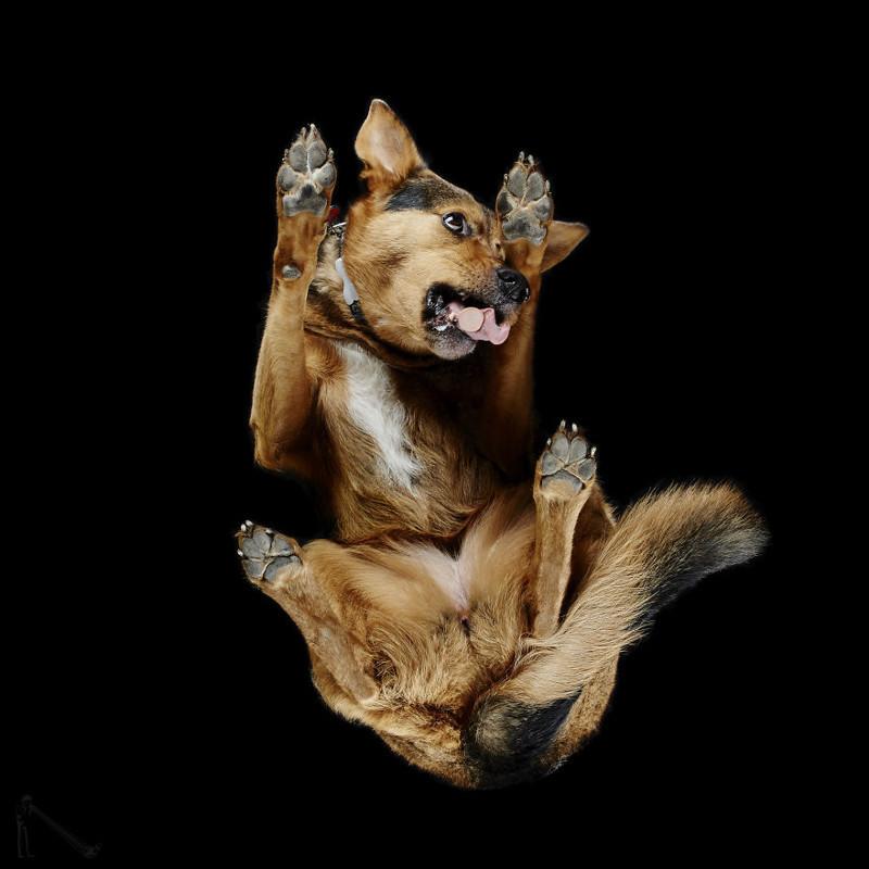 4. андриус бурба, вид снизу, необычный ракурс, собаки, фото