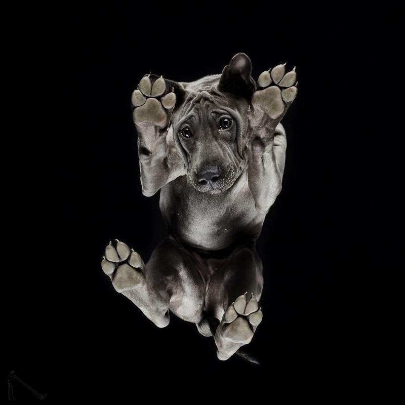 2. андриус бурба, вид снизу, необычный ракурс, собаки, фото