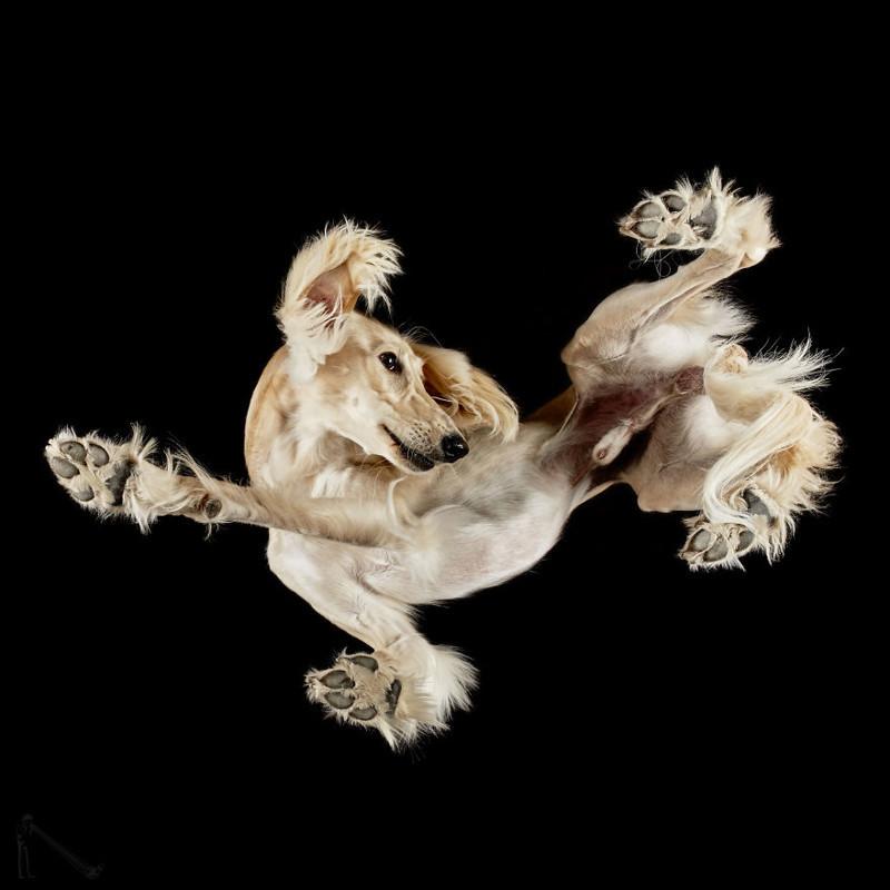 8. андриус бурба, вид снизу, необычный ракурс, собаки, фото