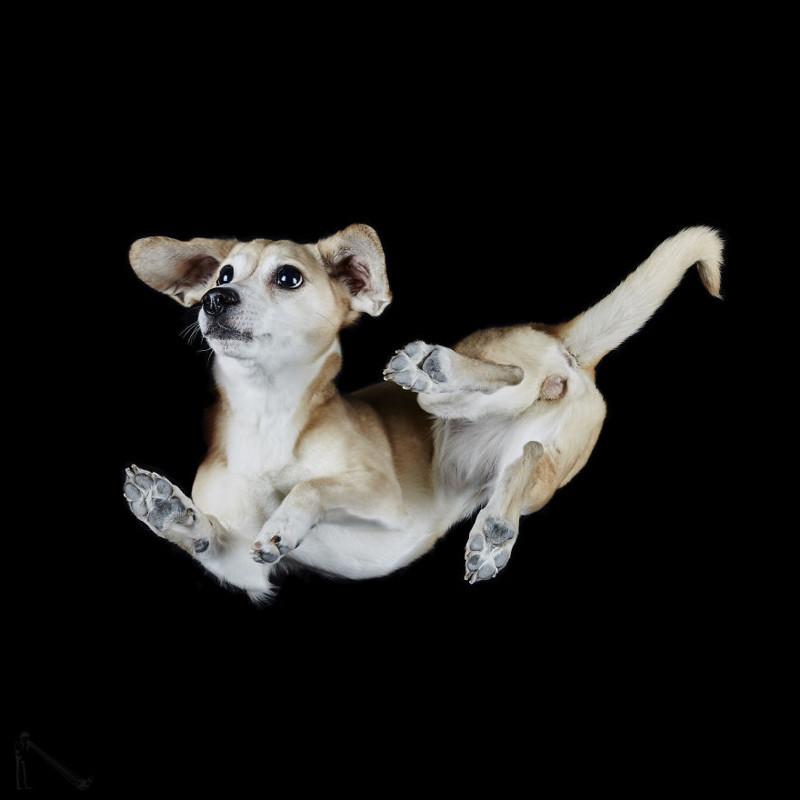 20. андриус бурба, вид снизу, необычный ракурс, собаки, фото