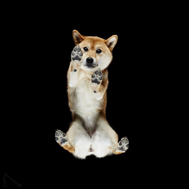 3. андриус бурба, вид снизу, необычный ракурс, собаки, фото