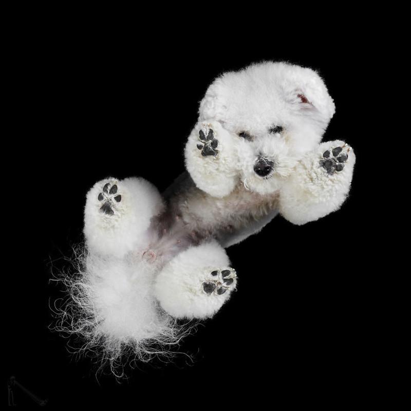 17. андриус бурба, вид снизу, необычный ракурс, собаки, фото