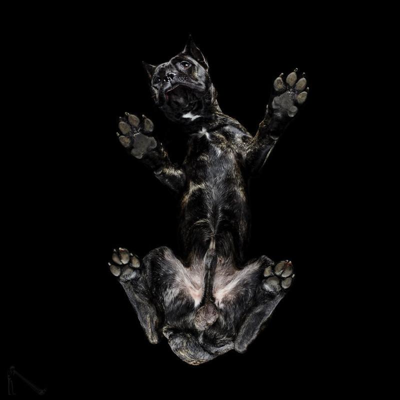 18. андриус бурба, вид снизу, необычный ракурс, собаки, фото