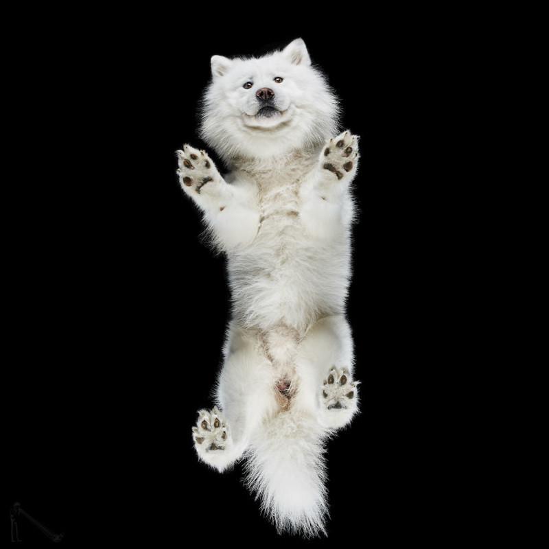 9. андриус бурба, вид снизу, необычный ракурс, собаки, фото