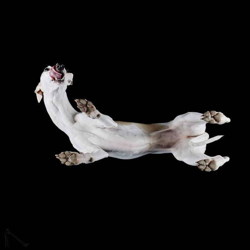 24. андриус бурба, вид снизу, необычный ракурс, собаки, фото