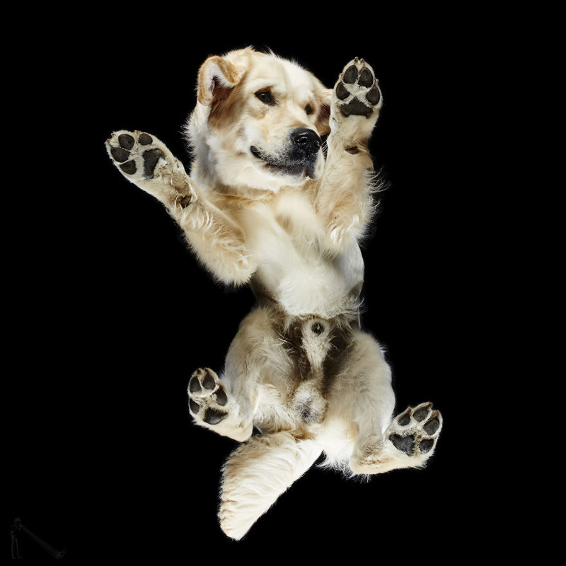 14. андриус бурба, вид снизу, необычный ракурс, собаки, фото