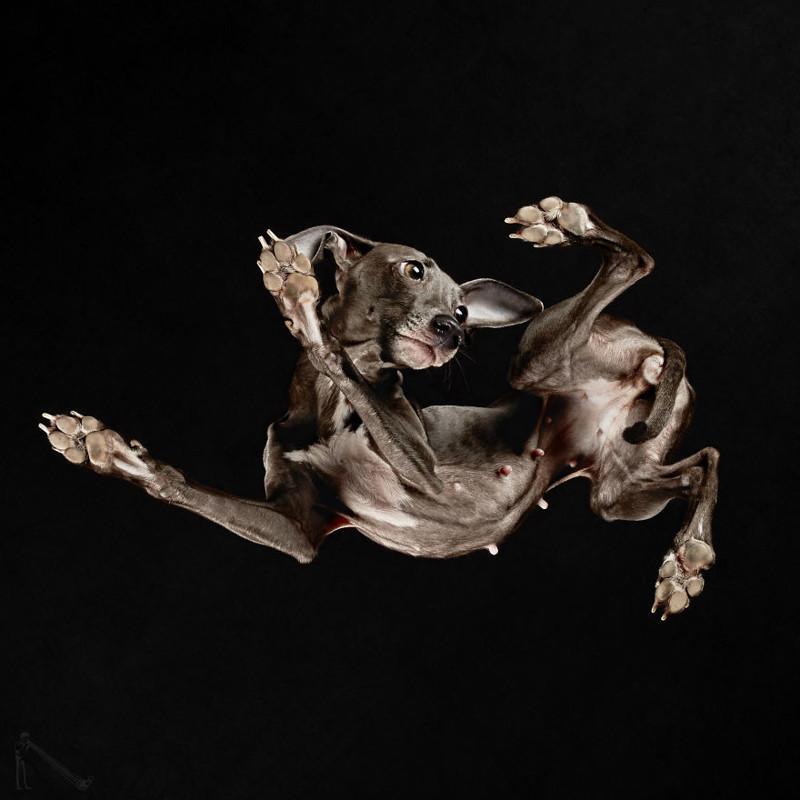 27. андриус бурба, вид снизу, необычный ракурс, собаки, фото