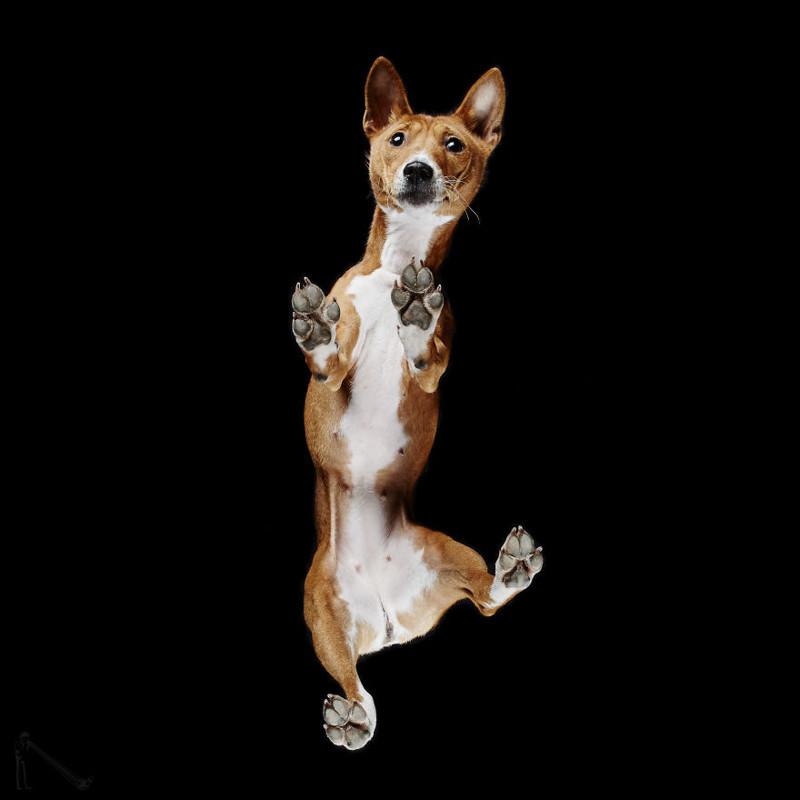 11. андриус бурба, вид снизу, необычный ракурс, собаки, фото