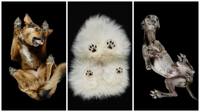 Собаки: вид снизу андриус бурба, вид снизу, необычный ракурс, собаки, фото