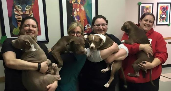 Брошенные щенки от стресса лишились шерсти, но их чудом спасли животные, собаки, спасение, счастливый конец