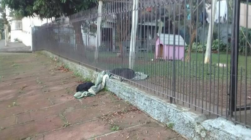 «Я подумала: «Как прекрасно то, что она сделала для своего друга», — рассказывает Суэлен Шомлоеффел (Suelen Schaumloeffel), хозяйка собаки. — Мой лучший четвероногий друг напомнил мне о чем-то столь важном: великодушии!» бразилия, в мире, дружба, животные, милота, помощь, собака