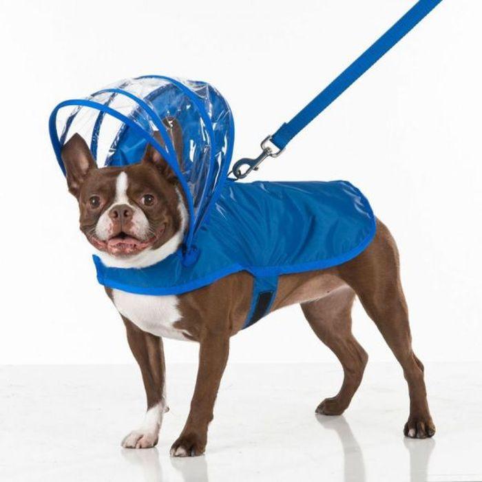 Тут и кепка модная  дождевик, животные, костюмы для животных, мило, собаки, фото