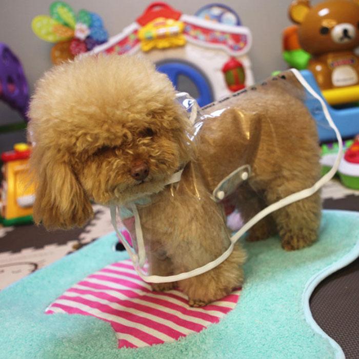 Собачья мода: как спрятаться от дождя и грязи дождевик, животные, костюмы для животных, мило, собаки, фото