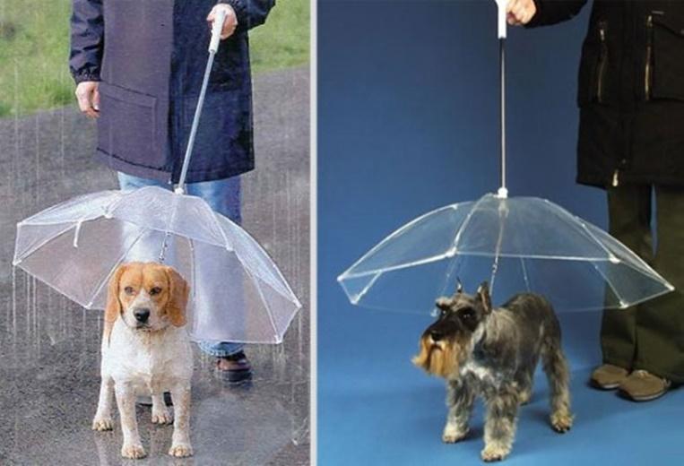 Существует даже зонт для собак  дождевик, животные, костюмы для животных, мило, собаки, фото