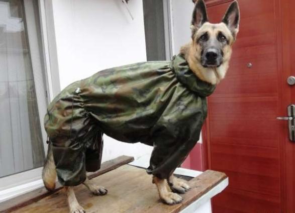 Защитник дождевик, животные, костюмы для животных, мило, собаки, фото