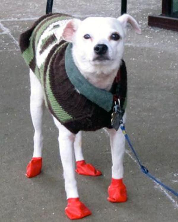 И обувь удобная дождевик, животные, костюмы для животных, мило, собаки, фото