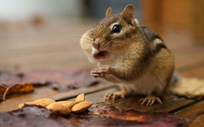 Безграничные возможности рта грызунов  белки, животные, орешки, смешно, фото, хомяк